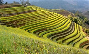 Yên Bái sapprête à accueillir la Semaine de la culture et du tourisme de Muong Lo