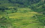 Les rizières en gradin confèrent à la province de Cao Bang (Nord) leur majesté. Photo : Quân Trang/VNA/CVN