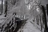 Un chauffeur conduit le long d'une route avec des arbres couverts de neige en banlieue de la capitale géorgienne Tbilissi. Photo : EPA/VNA/CVN