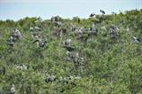 Le Parc national de Tràm Chim abrite 198 espèces d'oiseaux, dont 16 rares. Fondé en 1985, il est situé dans le district de Tam Nông de la province Dông Tháp. Sa superficie totale est de plus de 7.313 hectares. Il est devenu parc national en 1988 et le 2000e site Ramsar, zone humide d'importance internationale en vertu de la Convention de Ramsar, en 2012.  Plus de 2.000 bec-ouverts indiens, une espèce d'oiseau assez rare au Vietnam, ont choisi le Parc national de Tràm Chim pour passer l'hiver.  Photo : Minh Duc/VNA/CVN