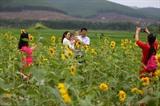 Le champ de tournesol de la ferme agricole Bach Duong, chef-lieu de Huong Trà, province centrale de Thua Thiên-Huê, est une destination de nombreux visiteurs locaux. Photo : Hô Câu/VNA/CVN