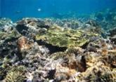 Les colonies coralliennes en péril