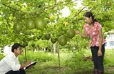Cao Bang a acquis une nouvelle physionomie basée sur ses atouts