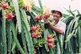 Les produits pour le Têt exportés à l'étranger