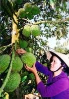Festival : fruits et cultivateurs à l'honneur à Tiên Giang