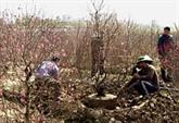 Balade dans les villages horticoles de Hanoi
