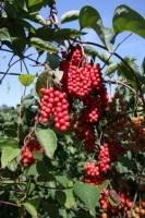 Se soigner par les fruits, les légumes et les plantes médicinales
