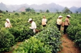 Priorité à la formation des ressources humaines de la Région Nord-Est