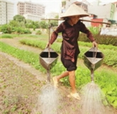 À Hanoi, l'urbanisation galopante menace l'horticulture
