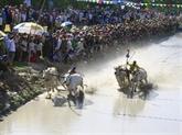 La traditionnelle course de  bœufs des Khmers