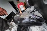 La hausse du pouvoir d'achat en Asie, une menace pour les poissons marins
