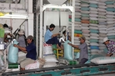 Exporter 7,5 millions de tonnes de riz cette année