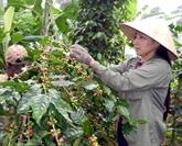 Pour rehausser la compétitivité des entreprises du café
