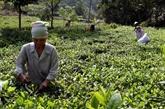 Thai Nguyên, «la capitale du vent venu de la forêt»