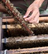 Aides vietnamiennes au Cambodge pour l'apiculture