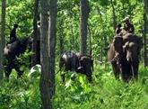 Sauvetage et remise en liberté d'un jeune éléphant sauvage