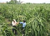 Vietnam et Cambodge renforcent leur coopération décentralisée dans l'agriculture