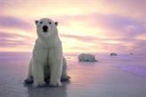 Exposition de photos sur l'«Arctique accessible»