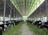Expérimentation d'une exploitation de vaches laitières nouvelle génération