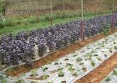Faire fortune grâce aux plantes odorantes étrangères