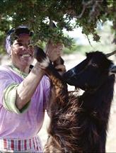 L'huile d'argan, facteur d'émancipation pour les femmes berbères