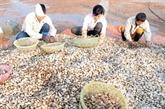 L'UE refuse certains mollusques bivalves vietnamiens