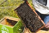 Grèce, paradis des abeilles