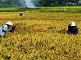 Bientôt le festival de l'agriculture à Hô Chi Minh-Ville