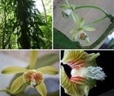 De nouvelles espèces végétales découvertes dans la réserve naturelle de Khanh Hoà