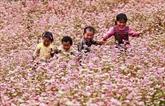 Fête des fleurs de sarrasin à Hà Giang