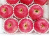 Les pommes japonaises font leur entrée au Vietnam