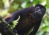 Une île du canal de Panama devenue la Mecque de la biologie tropicale