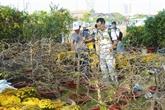 Hô Chi Minh-Ville en fleurs pour le Têt traditionnel