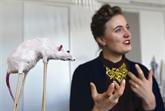 Quand les dépouilles d'animaux font le bonheur d'artistes néerlandais