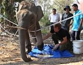 Sauvons les éléphants  de Dak Lak