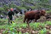 Plateau karstique de Dông Van : les hommes plus forts que la nature
