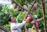Bilan des dix ans de développement de la cacaoculture