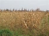 La sécheresse perdure, les dégâts s'alourdissent au Centre