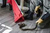 Quand la caserne des pompiers s'improvise refuge à reptiles