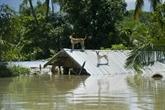 Le gouvernement birman demande une aide internationale