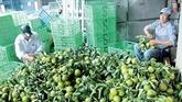 Dans la province de Hâu Giang : les fruits de la croissance