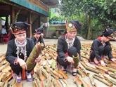 Les canneliers font la prospérité de Yên Bái