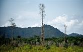 À Bornéo, pour des soins médicaux bon marché, ils cessent les coupes de bois illégales