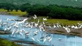 Parc national de Xuân Thuy : là où l'oiseau se pose