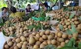 Le Vietnam exporte plus de 10.000 tonnes de fruits frais