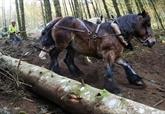 Dans le Morvan, le cheval à la rescousse d'une forêt protégée