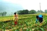 La JICA assiste la province de Yên Bai dans le développement rural