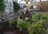 En Écosse, un thé d'exception pousse au pied des Highlands