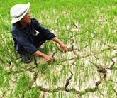 Le delta du Mékong menacé par la sécheresse et la salinisation