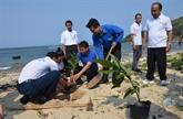 Quang Ngai : de jeunes lao plantent 100 arbres bàng vuông à Ly Son